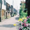 Photos: 路地に咲く