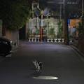 写真: 夜猫