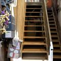 Photos: 階段の花