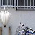 Photos: 忘れられた傘