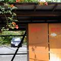 Photos: 朝市くん