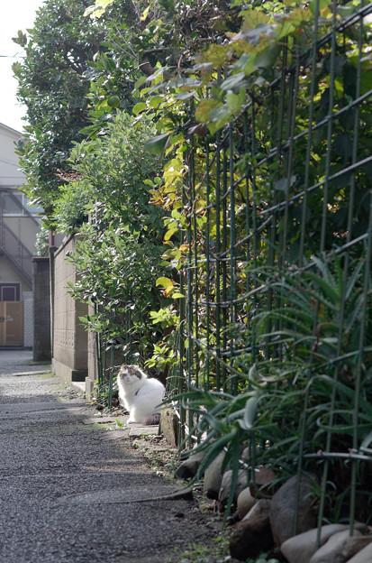 下町のゴージャス猫