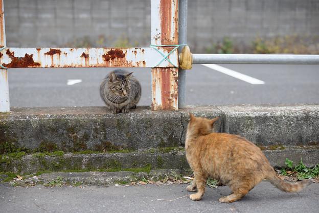 Photos: 眼力