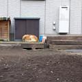 写真: 眠る犬