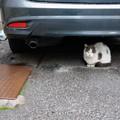 写真: 猫とペットボトル