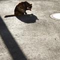 写真: 猫影