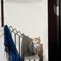写真: 座る猫