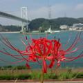 写真: 関門海峡   DCF00994