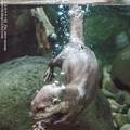 写真: aquatotto171228461