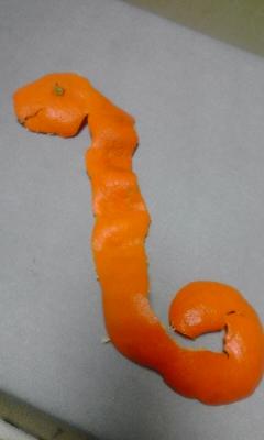 写真: オフロスキー!みかんでヘビ...