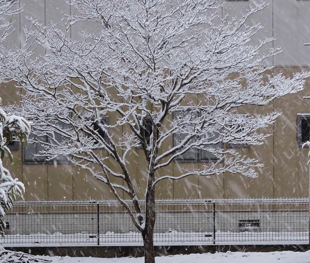 速報初雪・・1  2018:01:22