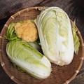白菜&カリフラワー