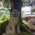 写真: 宮島神社