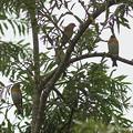 写真: yamanao999_birds_309