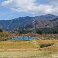 城端町柿畑風景