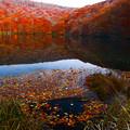 写真: 落ち葉色合わせ