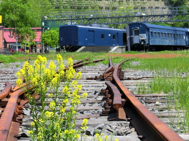 鉄路の菜の花
