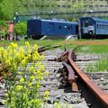 写真: 鉄路の菜の花