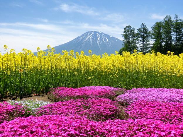 春の羊蹄山