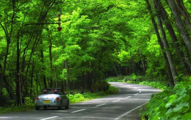 支笏湖緑のトンネル2