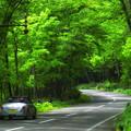 写真: 支笏湖緑のトンネル2