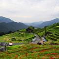 写真: 丸山千枚田