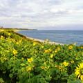 写真: 鳴り石の浜