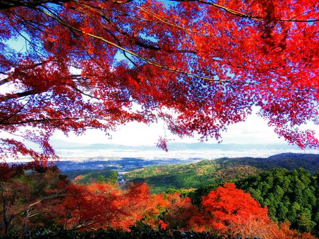 善峯寺の紅葉4