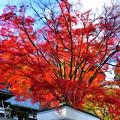 Photos: まるで紅葉の噴火のような…