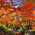 Photos: 根来寺の紅葉