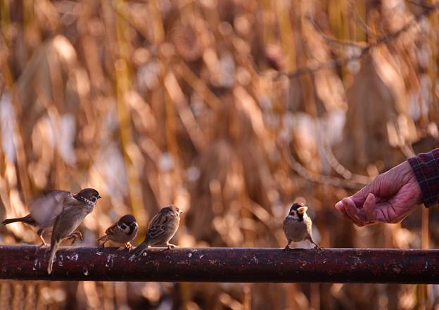 スズメの給食の時間