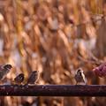 Photos: スズメの給食の時間