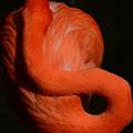 写真: フラミンゴの輪