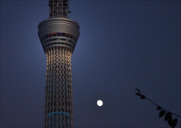 Photos: 月とスカイツリー
