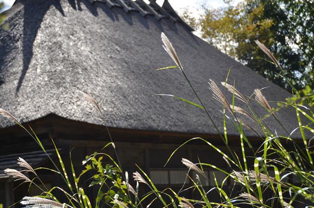 茅葺屋根とススキ