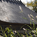 写真: 茅葺屋根とススキ