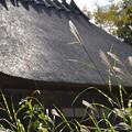 Photos: 茅葺屋根とススキ