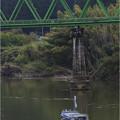 写真: 阿武急橋梁を潜る
