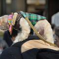 写真: 犬の初詣