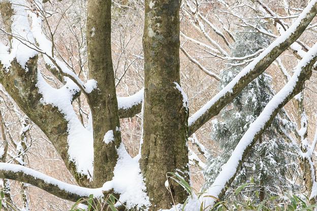 金剛山の森