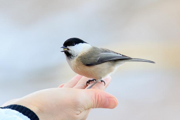 金剛山の野鳥 3