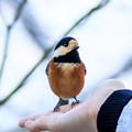 写真: 金剛山の野鳥 1