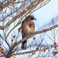 写真: 金剛山の野鳥2-2