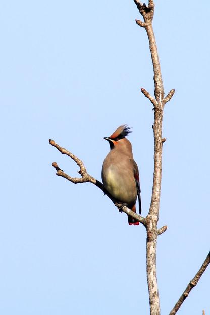 写真: 金剛山の野鳥2-1