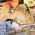 写真: 小鳥の水場 2