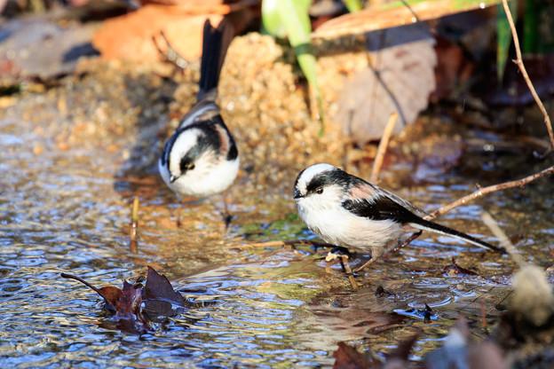 小鳥の水場 1