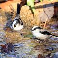 写真: 小鳥の水場 1
