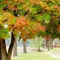 秋を奏でる♪