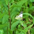 写真: 緑の葉に~