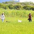 写真: 犬を散歩させる奥様方~